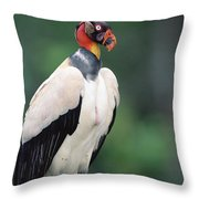 King Vulture In Breeding Colors Throw Pillow