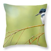 Kingfisher On A Willow Throw Pillow