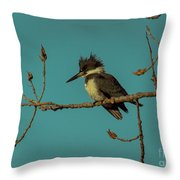 Kingfisher On Limb Throw Pillow