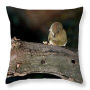 Kinglet On The Feed Throw Pillow