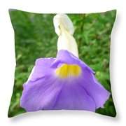 King's Mantle Flower  6 Throw Pillow