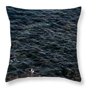 Seagulls At Cliffs Ready To Fish In Mediterranean Sea - Kings Of The World Throw Pillow