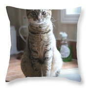 Kitchen Cat Throw Pillow