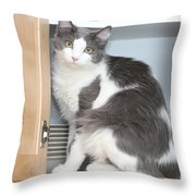 Kitchen Cubbard Cat Throw Pillow