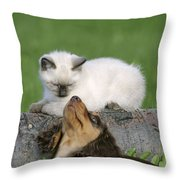 Kitten And Puppy Playing Throw Pillow