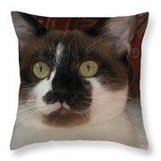 Kitten Black On Chocolate Silktapestrycatstm Throw Pillow