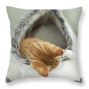 Kitten In An Igloo Throw Pillow
