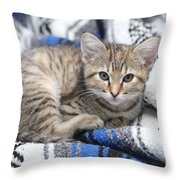 Kitten In The Blanket Throw Pillow