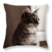 Kitten In The Light Throw Pillow