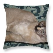 Kitten Tortie Enchanting Mint Green Eyes Throw Pillow