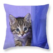 Kitten With A Curtain Throw Pillow