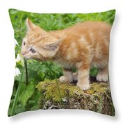 Kitten With Flowers Throw Pillow