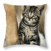 Kitten With Golden Retriever Throw Pillow