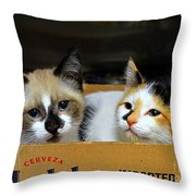 Kittens In A Box Throw Pillow