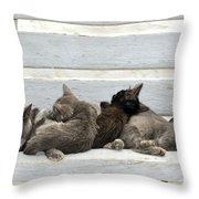Kittens In Hydra Island Throw Pillow
