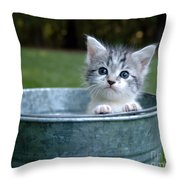 Kitty In A Bucket Throw Pillow