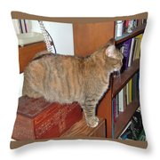 Kitty On The Big Box Throw Pillow