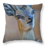 Klipspringer Portrait Throw Pillow