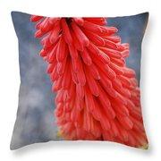 #kniphofiauvaria Throw Pillow