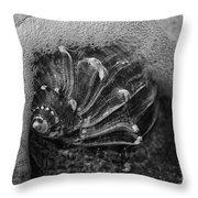 Knobbed Whelk Bw 4 Botany Bay Throw Pillow