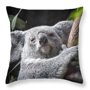 Koala Bear Throw Pillow by Tom Mc Nemar