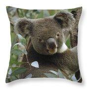 Koala Male In Eucalyptus Australia Throw Pillow