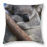 Koala Male Sleeping Australia Throw Pillow