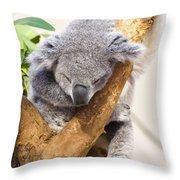 Koala Sleeping  Throw Pillow
