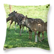Kudu Antelope In A Straight Line Throw Pillow
