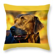 Lab Puppy At Sunset Throw Pillow