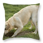Labrador Checking Hole Throw Pillow