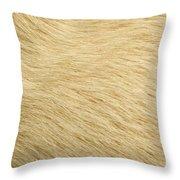 Labrador Coat Throw Pillow