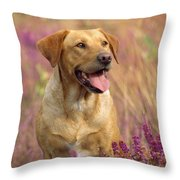 Labrador Dog Throw Pillow