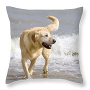 Labrador Dog Playing On Beach Throw Pillow