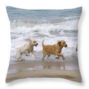 Labrador Dogs Running Throw Pillow