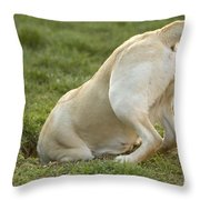 Labrador In Hole Throw Pillow