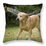 Labrador Playing In Water Throw Pillow