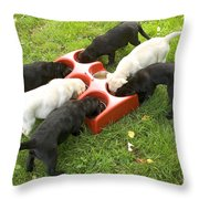 Labrador Puppies Eating Throw Pillow