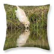 Labrador Puppy Drinking Throw Pillow