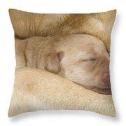 Labrador Puppy On Mother Throw Pillow