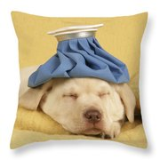 Labrador Puppy With Ice Pack Throw Pillow