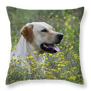 Labrador Retriever Dog Throw Pillow