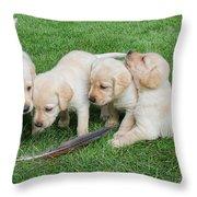 Labrador Retriever Puppies And Feather Throw Pillow
