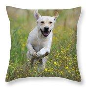 Labrador Running Throw Pillow