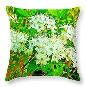 Labrador Tea In Sawtooth National Recreation Area-idaho  Throw Pillow