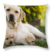 Labrador With Two Puppies Throw Pillow