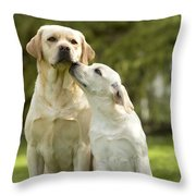 Labradors, Adult And Young Throw Pillow