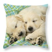 Labs Sleeping On A Blanket Throw Pillow by Greg Cuddiford
