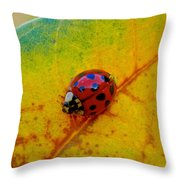 Lady Bug 3 Throw Pillow