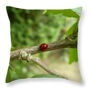 Lady Bug Branch Throw Pillow